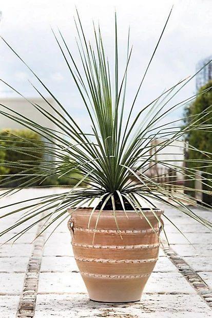 plants, pots, terracotta