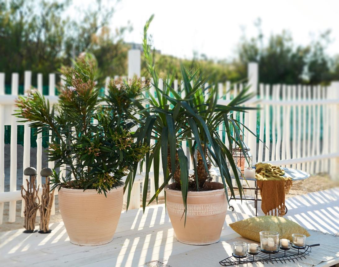 pots, planters, clay pots